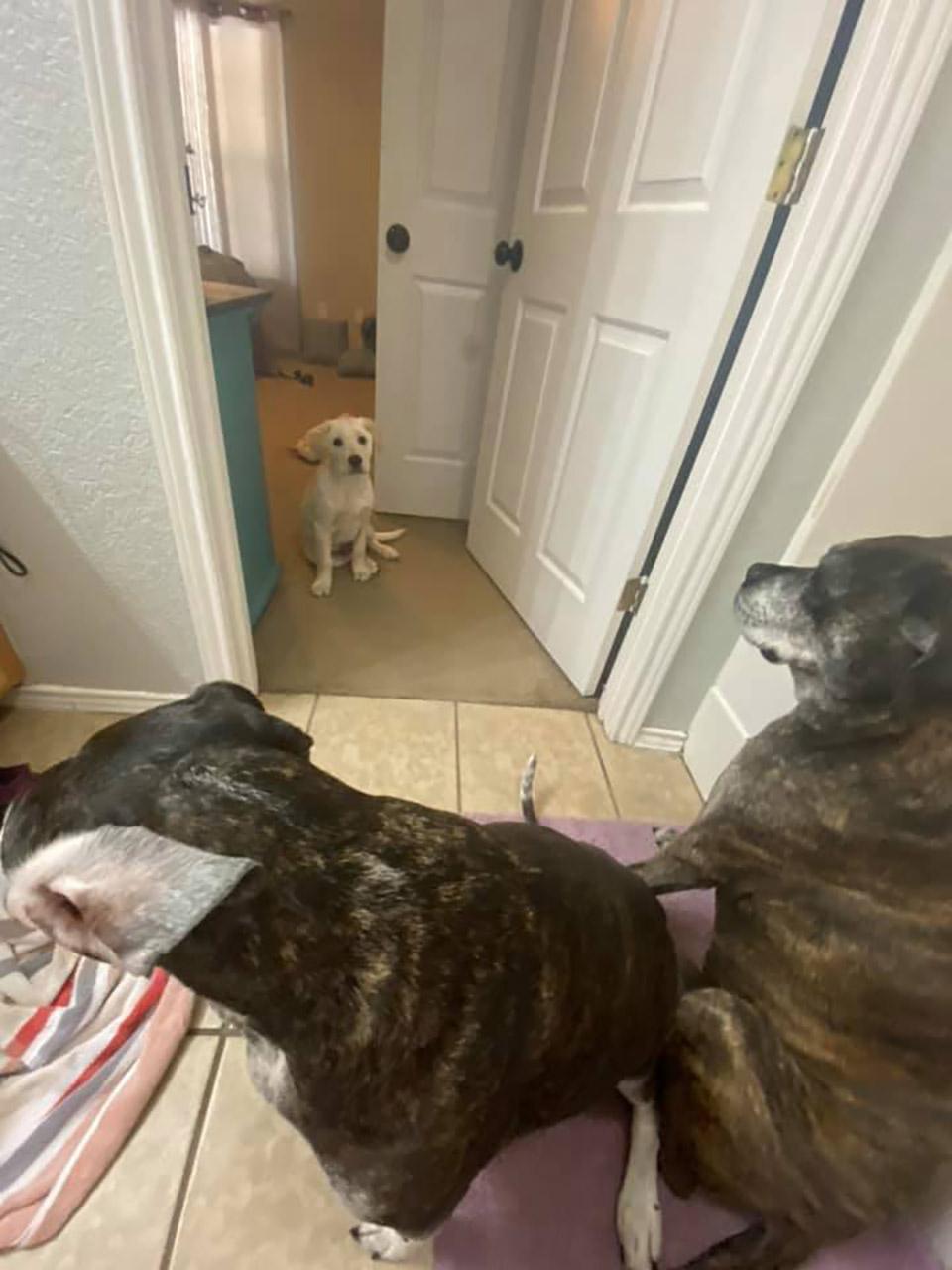 Cachorro y sus amigos