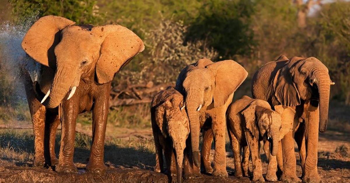 Cazador furtivo de rinocerontes muere pisoteado