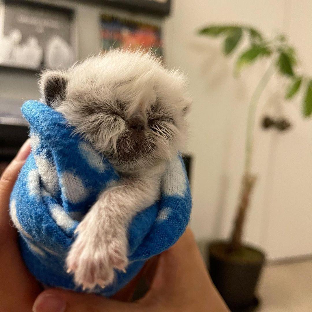 Dulce gato bebé