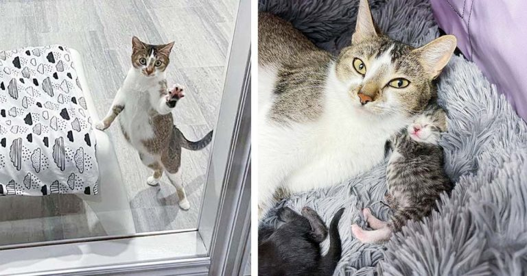 Gata visita a una vecina que fue amable con ella para que sus gatitos puedan vivir mejor