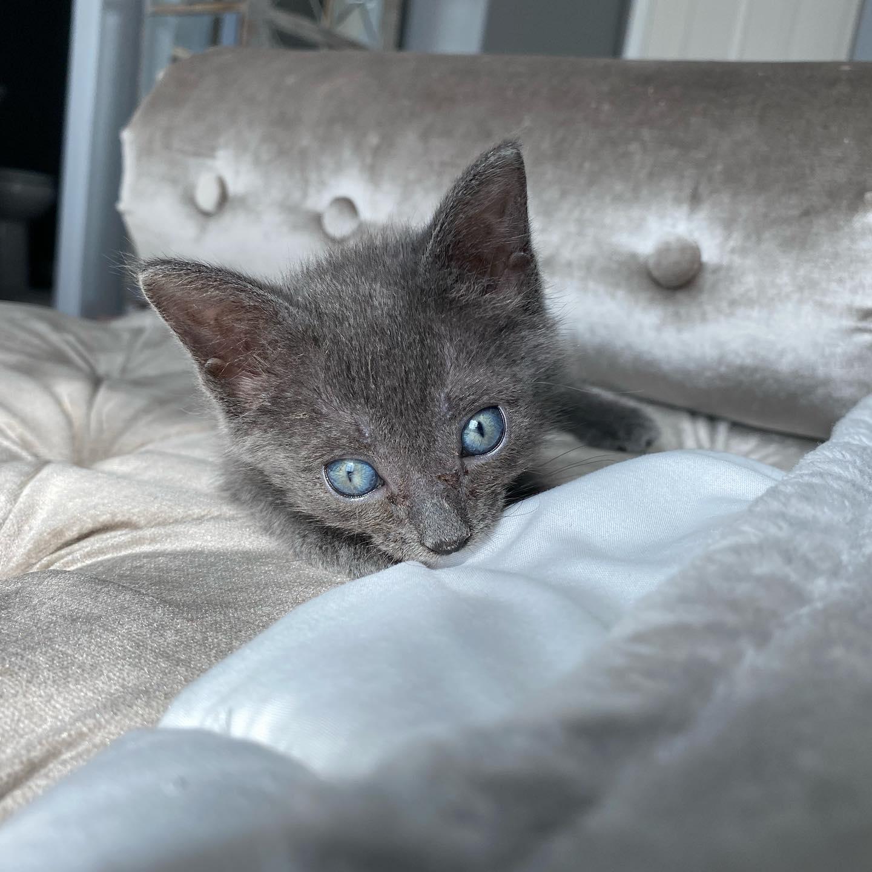 Gatita adorable en el sofá
