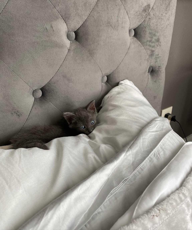 Felina escondida entre almohadas