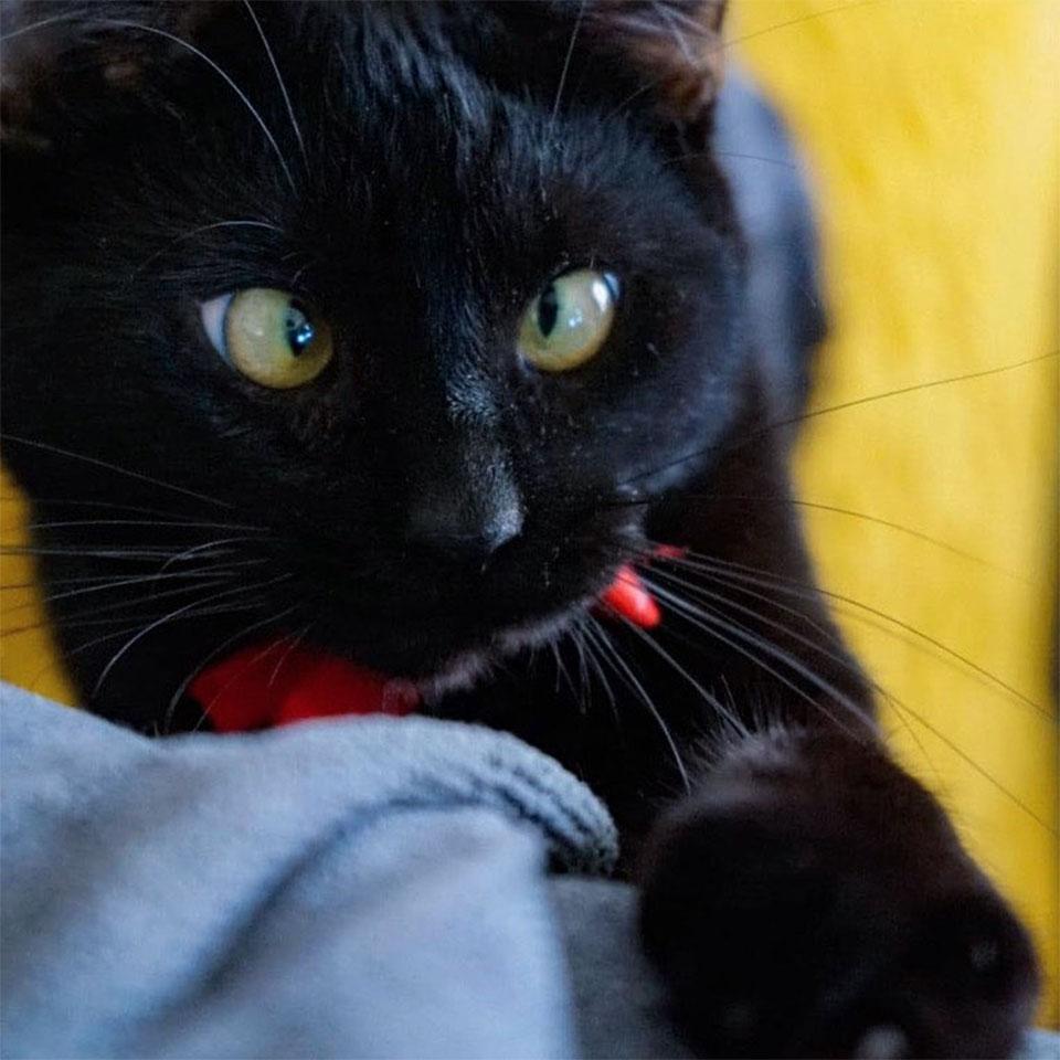 Gato bizco encontró hogar
