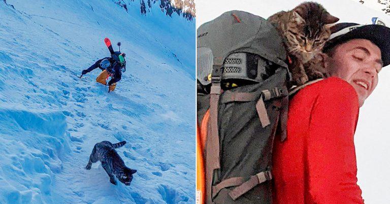 Gato perdido sigue a excursionistas hasta la cima de una montaña en Suiza