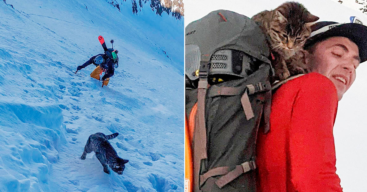 Gato perdido sigue a excursionistas en Suiza en busca de ayuda