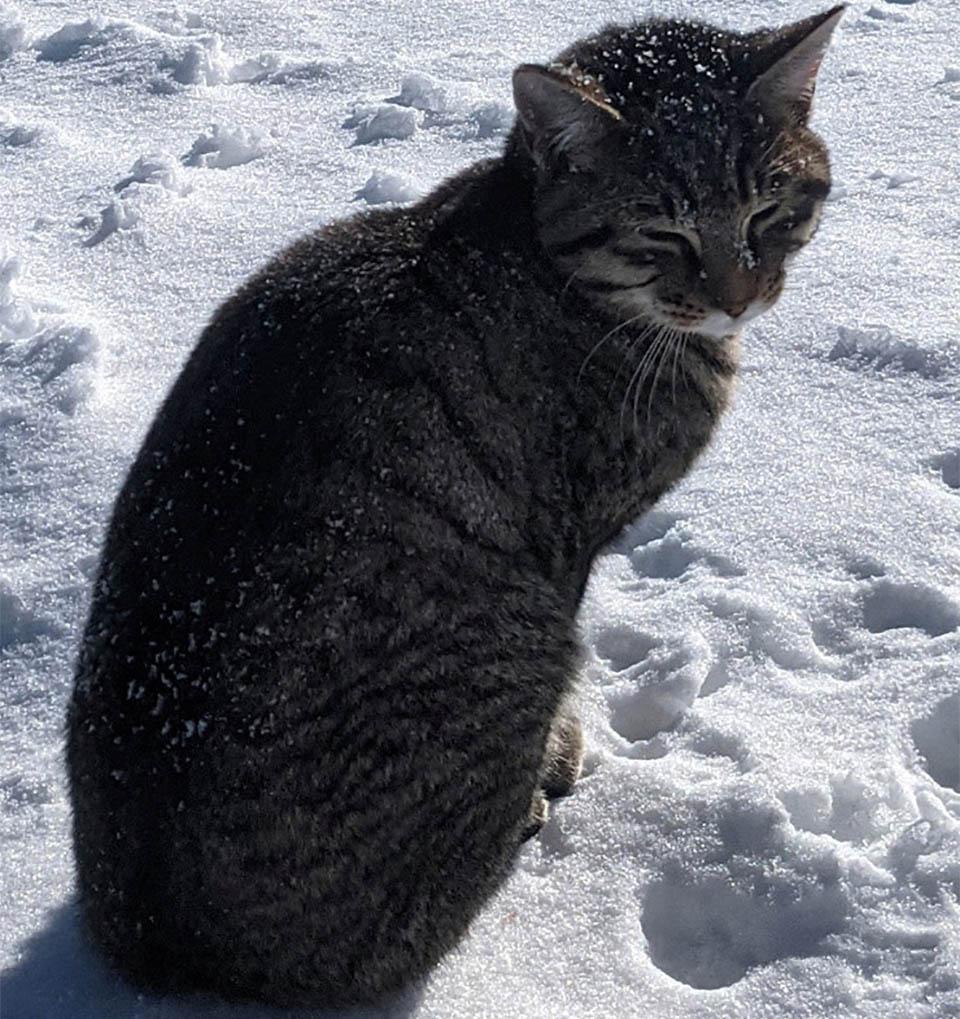 Gato sigue excursionistas