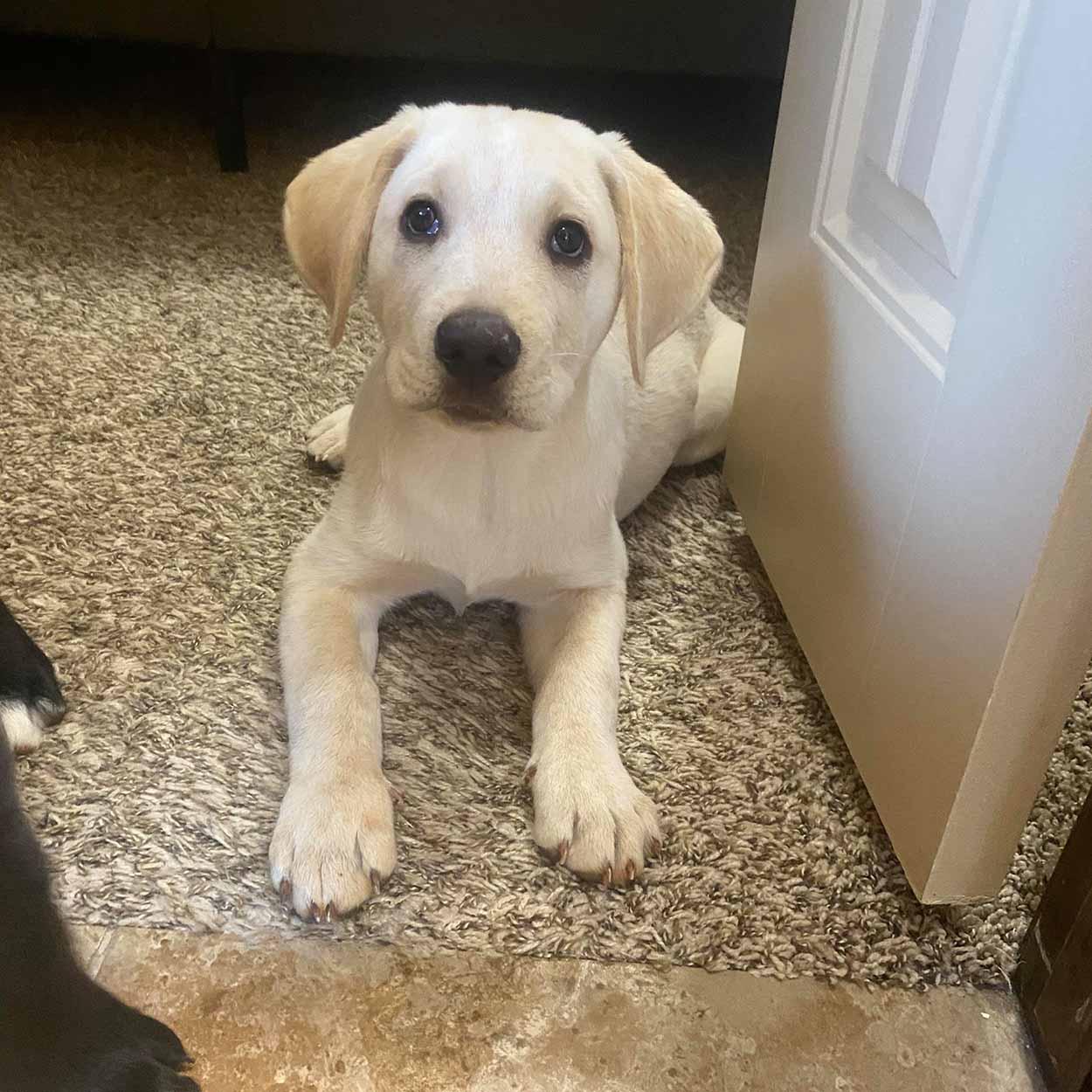 Hermoso cachorro