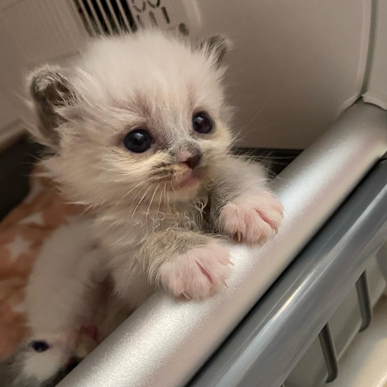 Hermoso gatito bebé