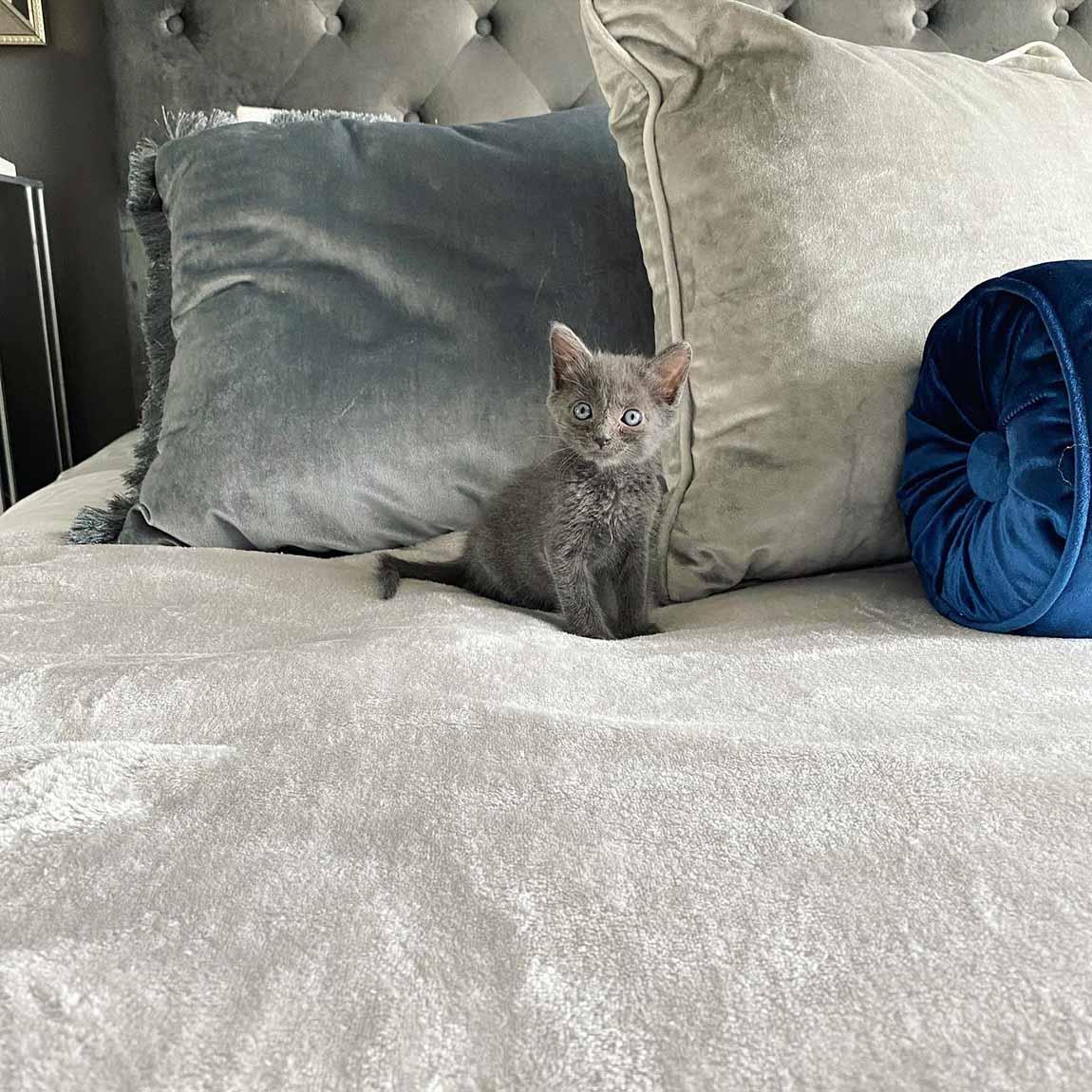 Hermoso felino bebé
