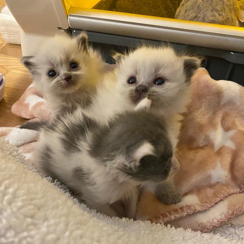 Hermosos gatitos rescatados