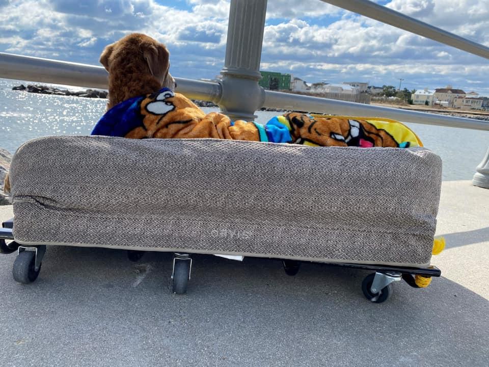 Hombre construye una cama móvil para su perro