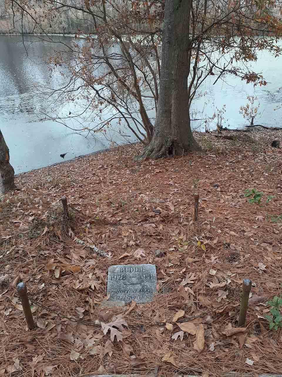 Hombre descubre tumba de un perro de 80 años