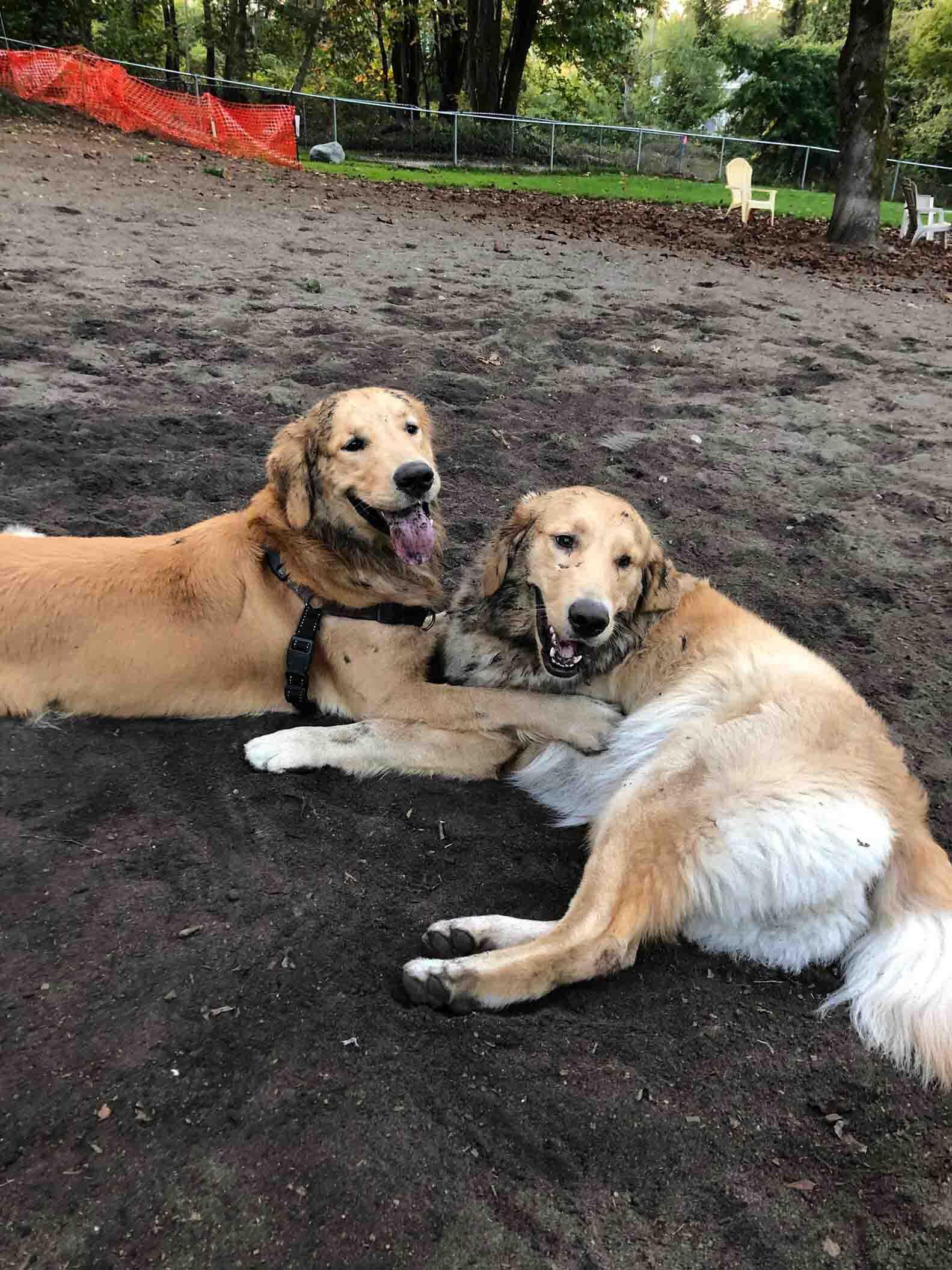 Mascota ve a otro perro en parque para perros y lo reconoce