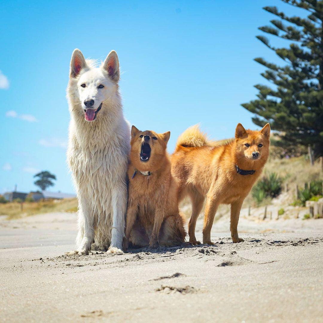 Mascotas disfrutando de la playa