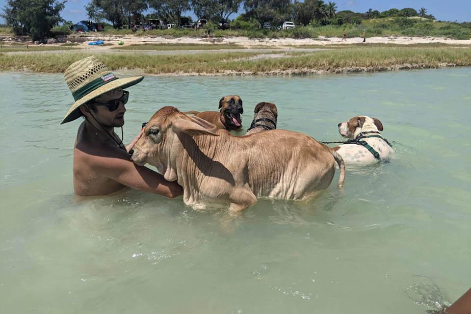 Mascotas en el agua