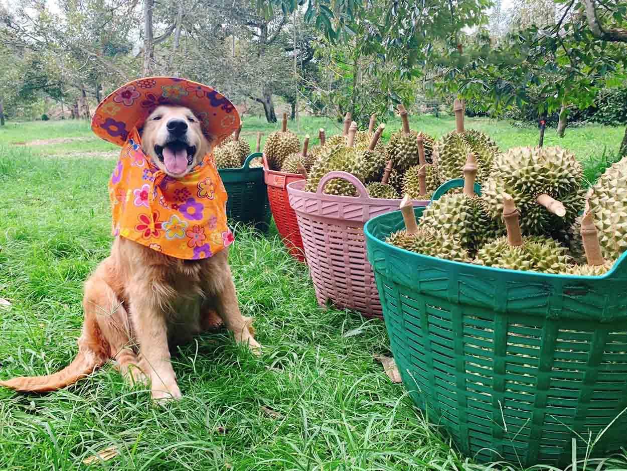 Perrito posa junto a la cosecha