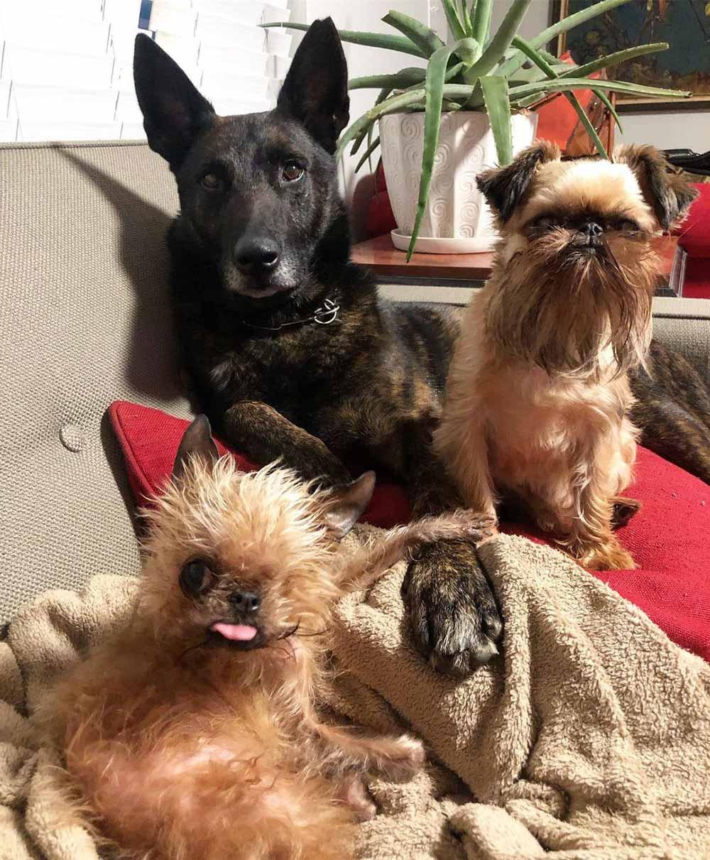 Perritos en el sofá