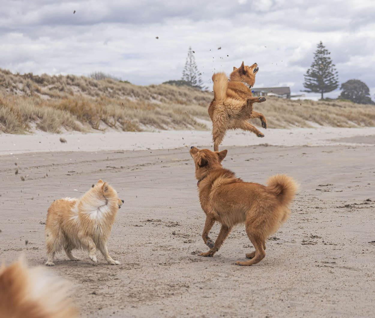 Perro ama tanto la playa y no puede dejar de saltar