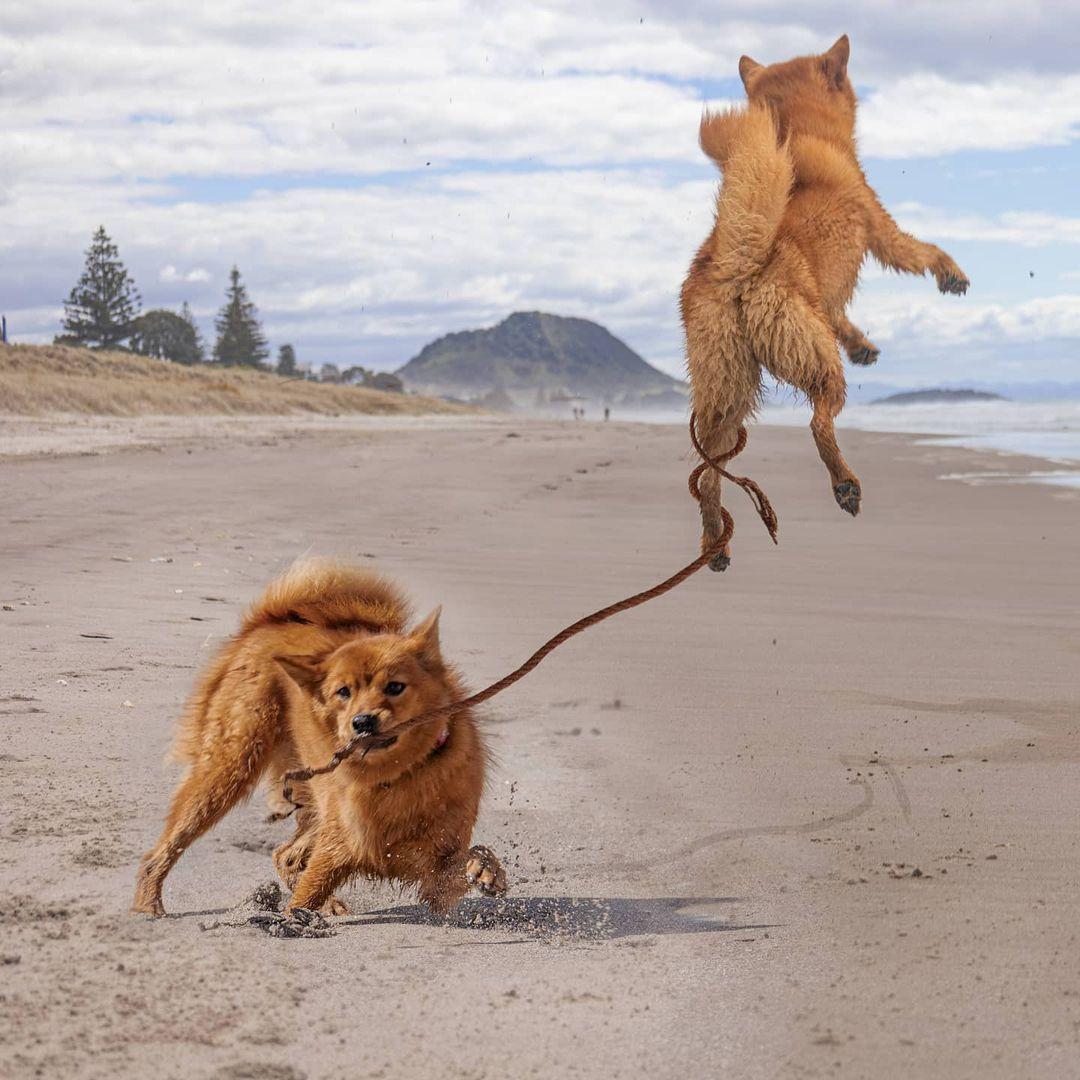 Perro ama tanto la playa
