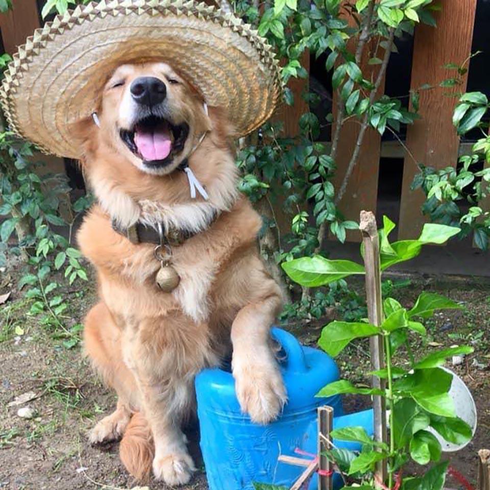 Perro luce hermoso sombrero