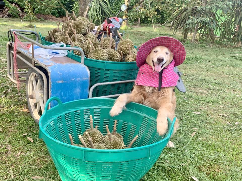 Perro posa para la foto de la cosecha familiar