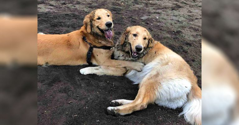Perro se encuentra con otro en el parque canino y lo reconoce de inmediato