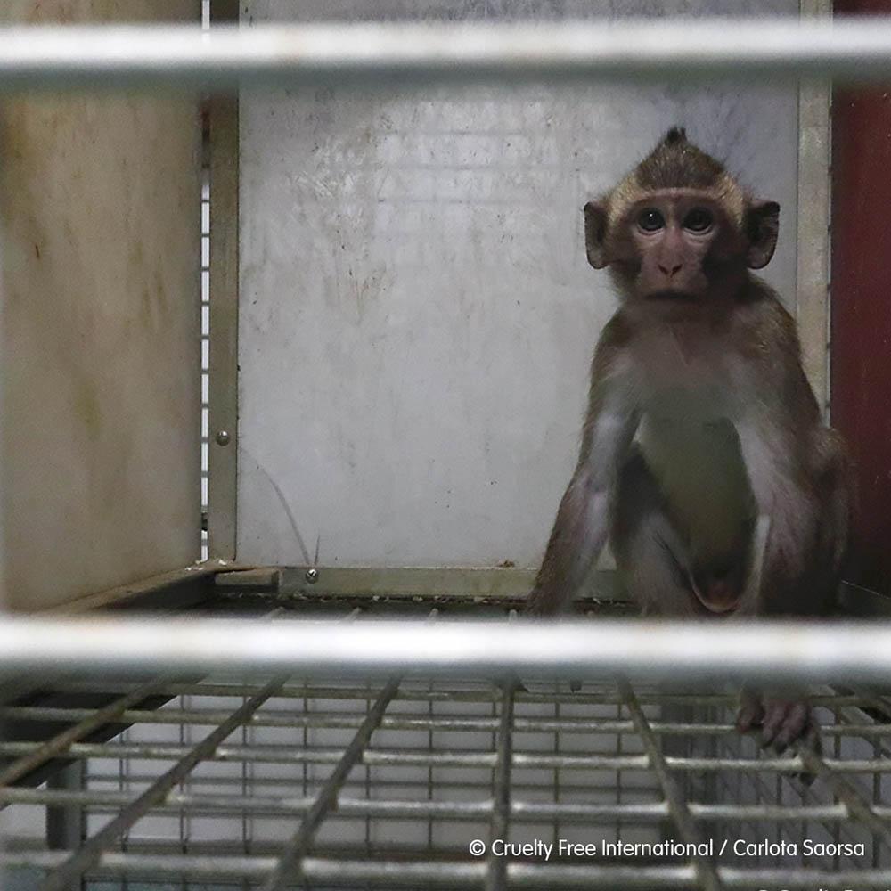 Primate en una jaula