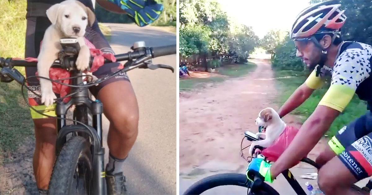 Ciclista ve a un cachorro al costado de la carretera y cambia su vida para siempre