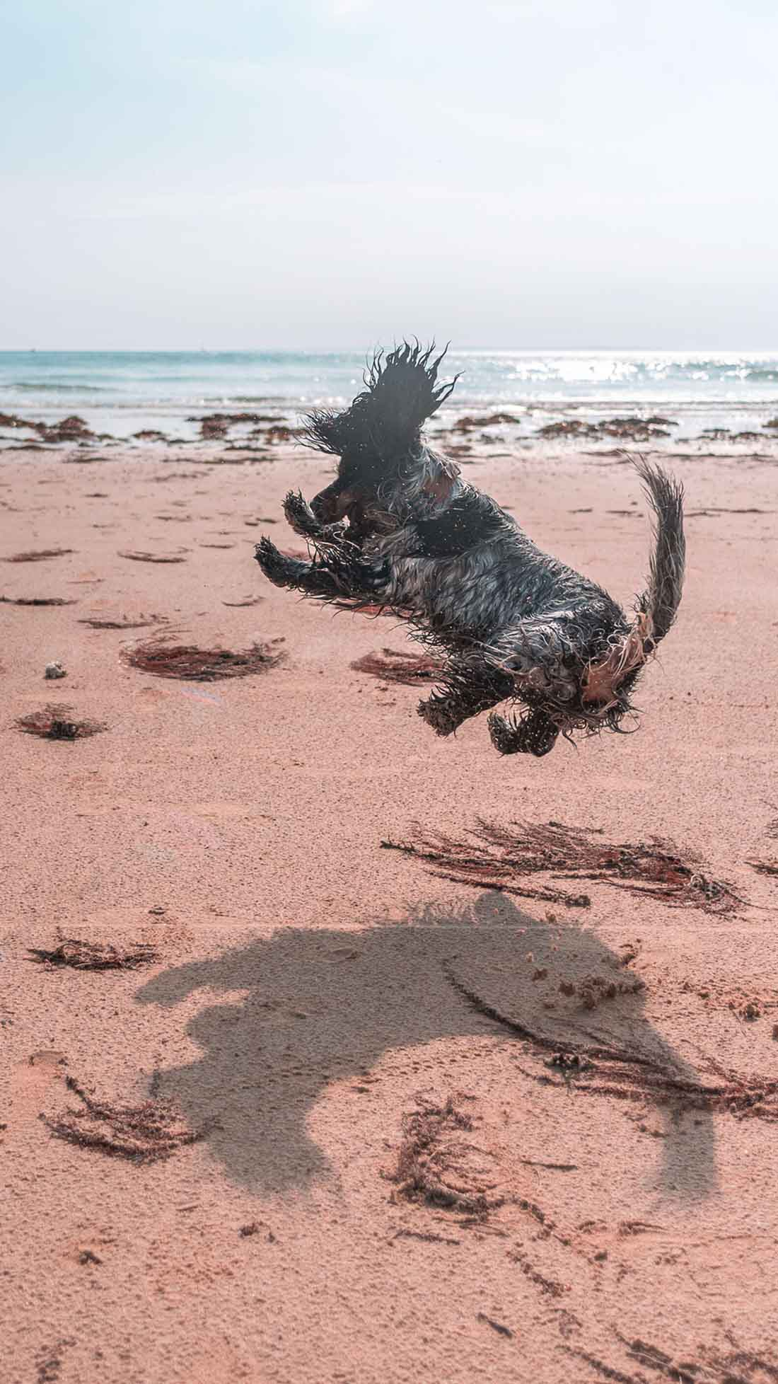 Divertido perro saltando