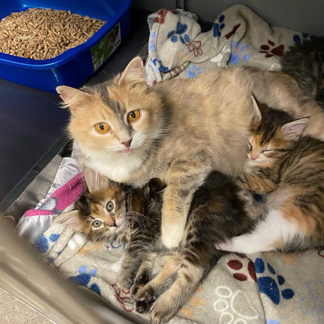 Gatita y sus bebés