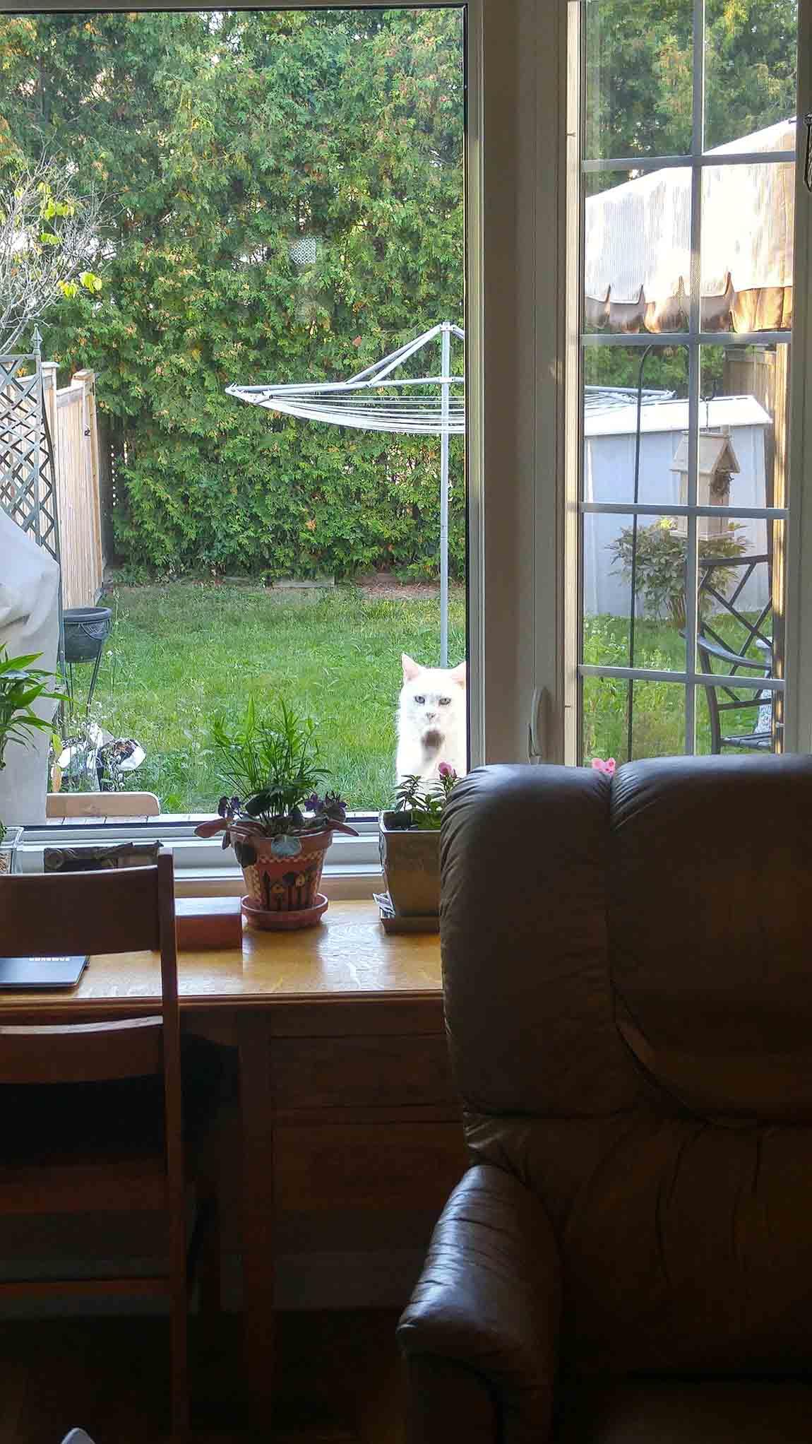 Gatito a través de la ventana