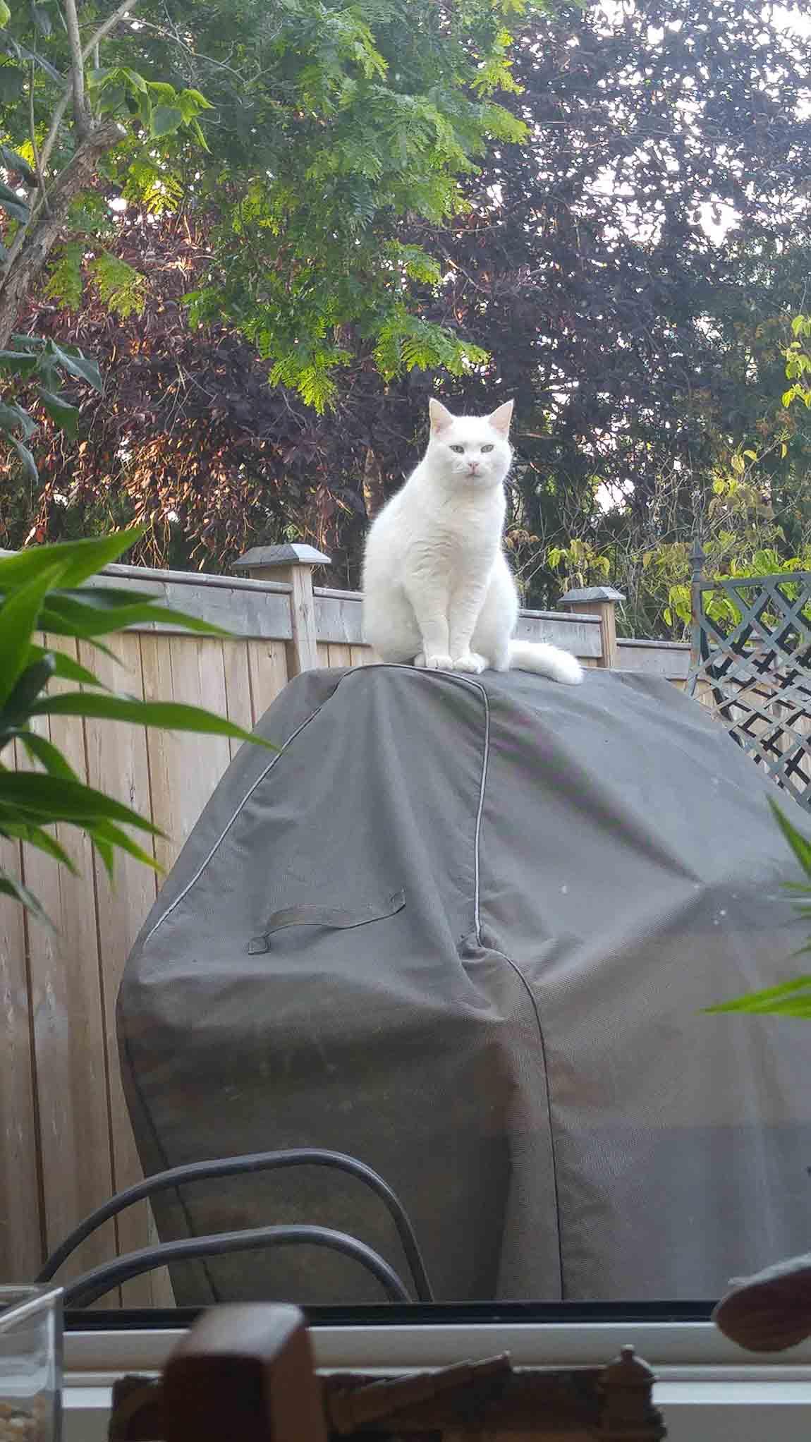 Gato visita a su vecino a diario