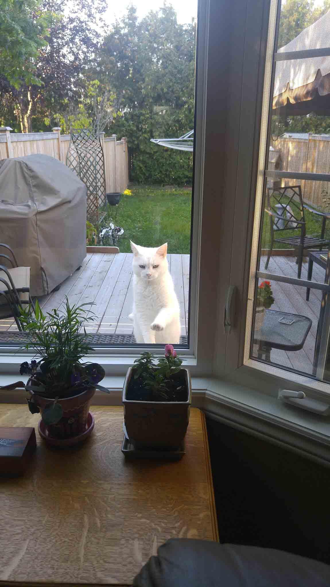 Gato visita a su vecino por golosinas