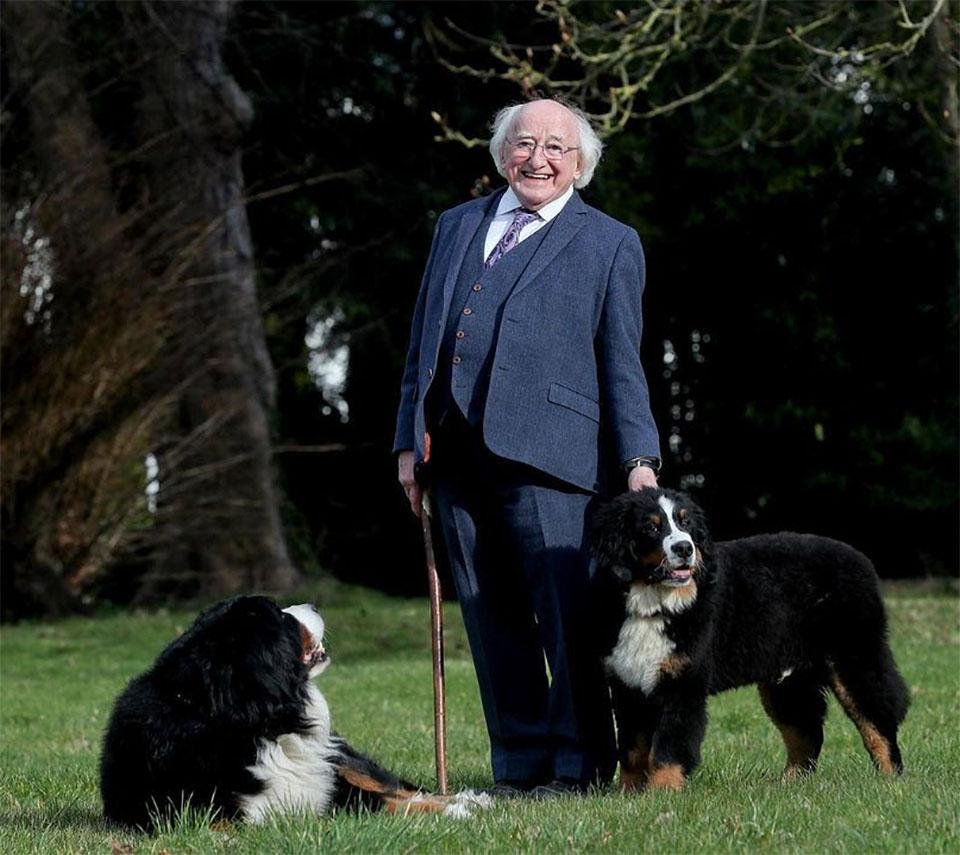Higgins y sus perros