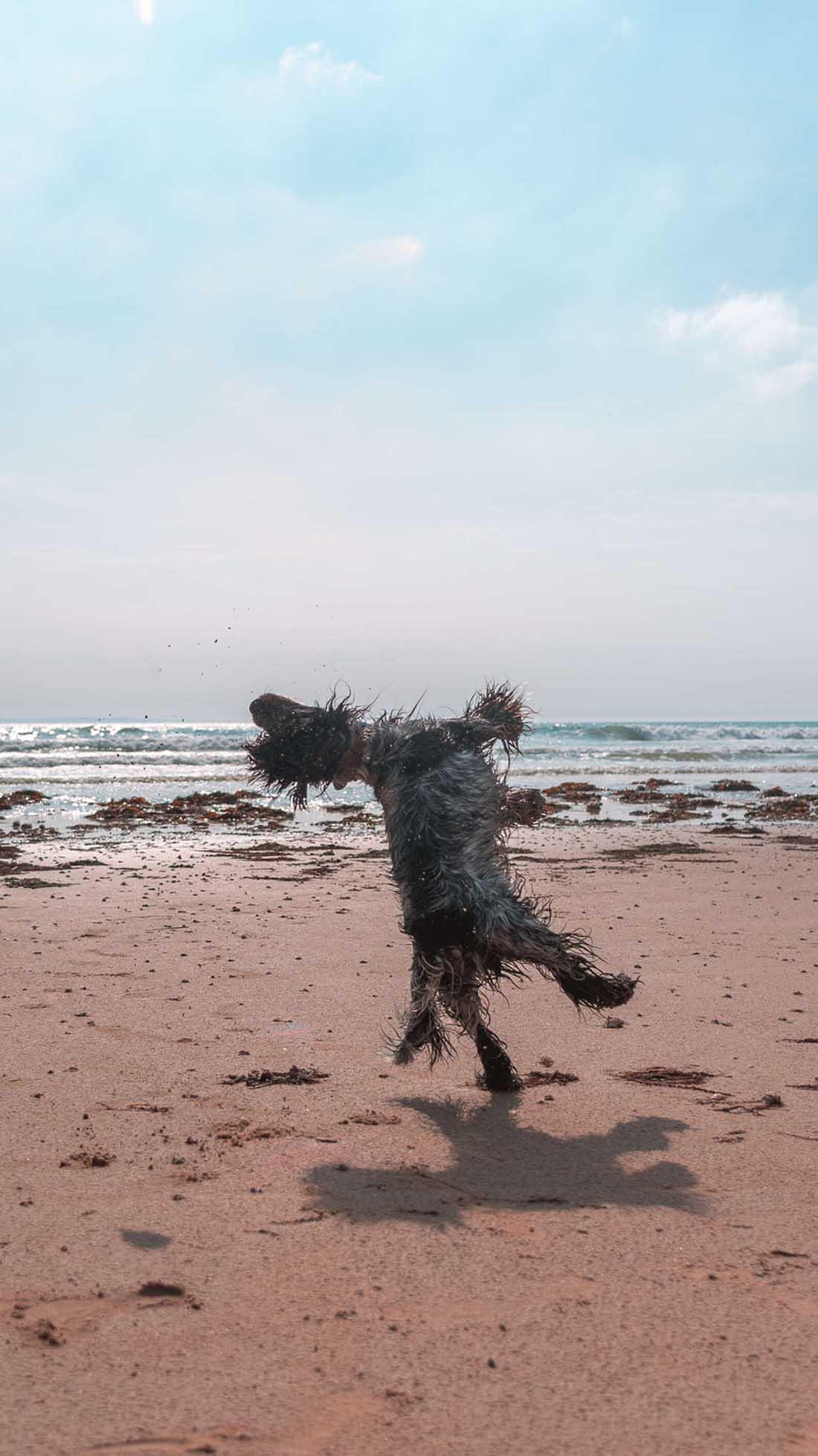 Mascota se divierte en la playa