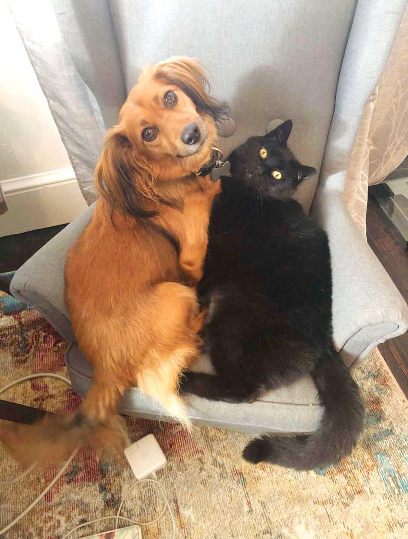Mascotas comparten la silla nueva