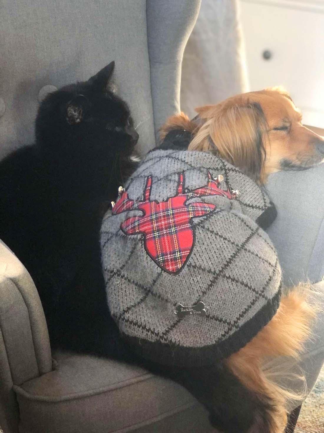Mascotas toman la siesta juntas