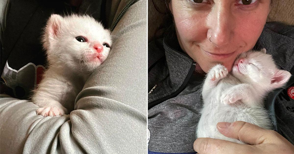 Pequeño gatito encontró a su madre