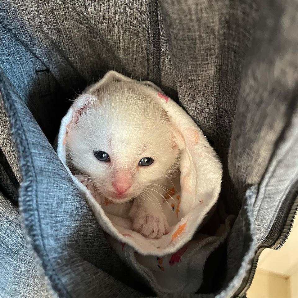 Pequeño gatito encontró hogar