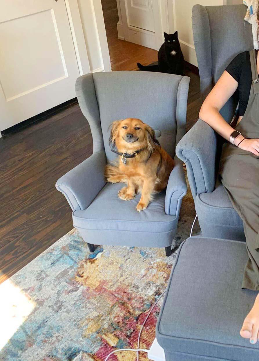 Perro consigue una silla a juego con su mamá