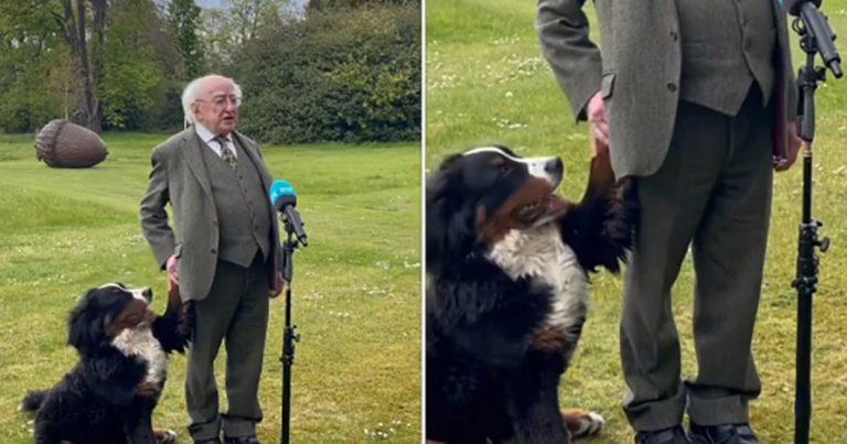 El perro del presidente de Irlanda pide atención durante una entrevista