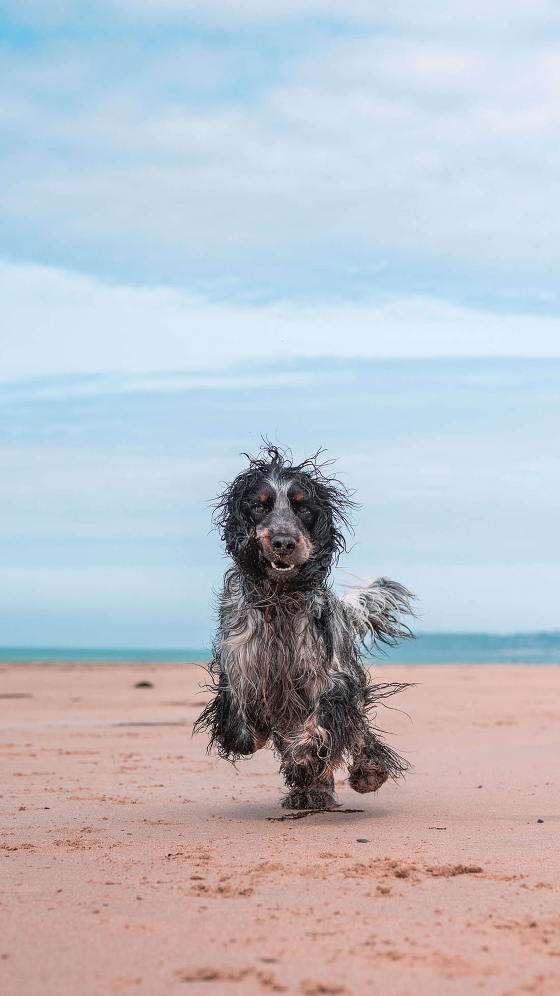Perro demuestra lo mucho que ama la playa