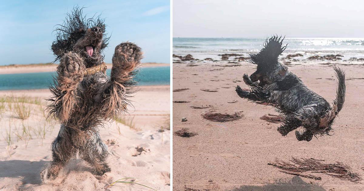 Perro le demuestra a todos lo mucho que ama ir a la playa