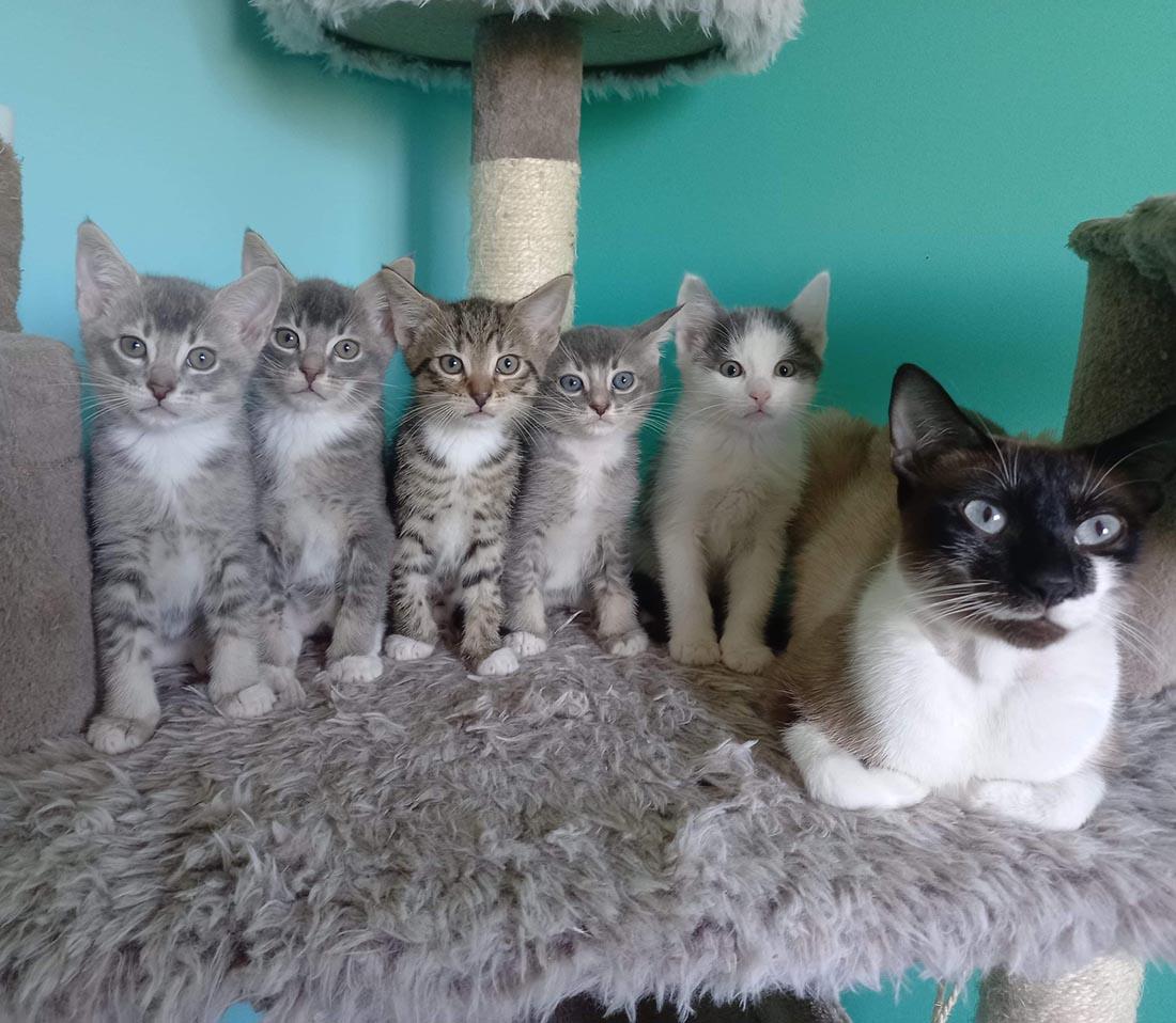 Adorable familia de gatitos