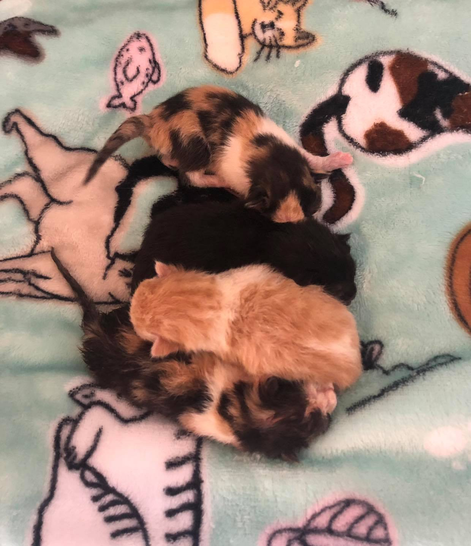 Adorables gatitos bebés