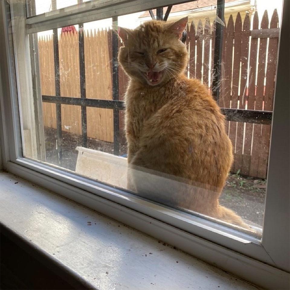 Amigable gato pidiendo ayuda