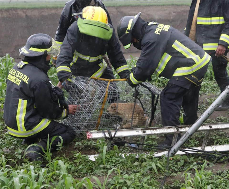Bomberos rescatan animales