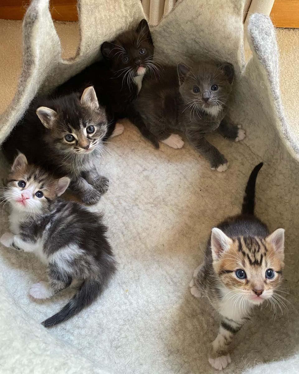 Camada de felinos