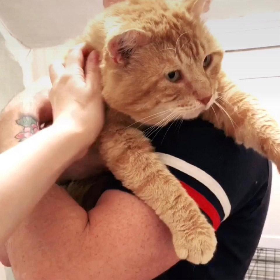 Carlton rescatado