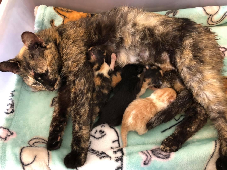 Gata Gata embarazada se protegió del frío hasta encontrar lugar para dar a luz
